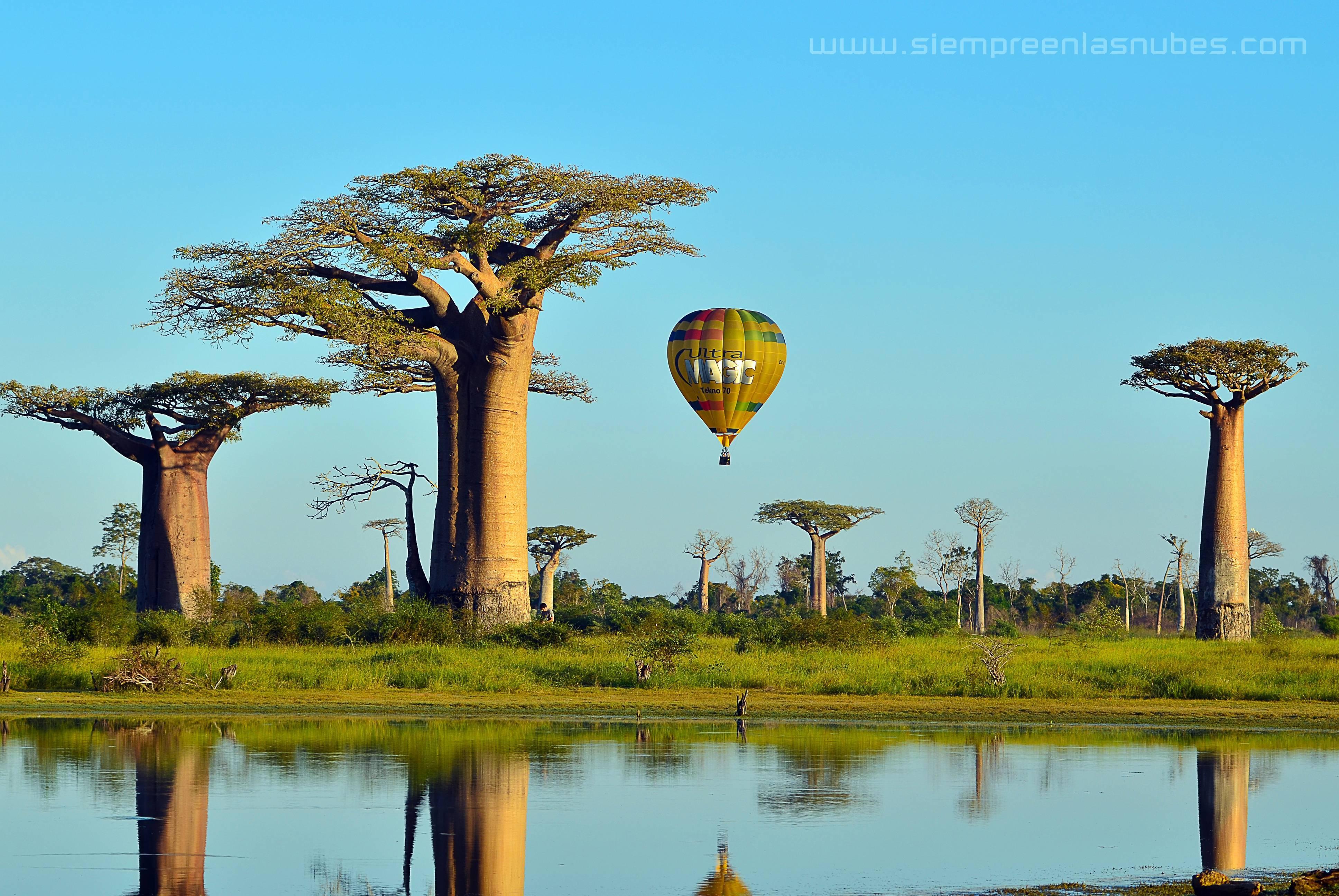 Avenida de los Baobabs, Morondava, Madagascar